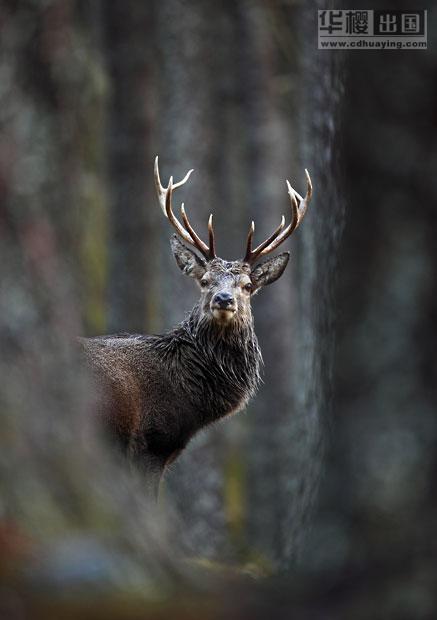 2012英国野生动物摄影奖揭晓